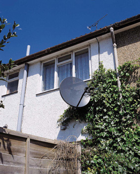 Satellite dish foilage